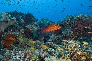 diving cebu