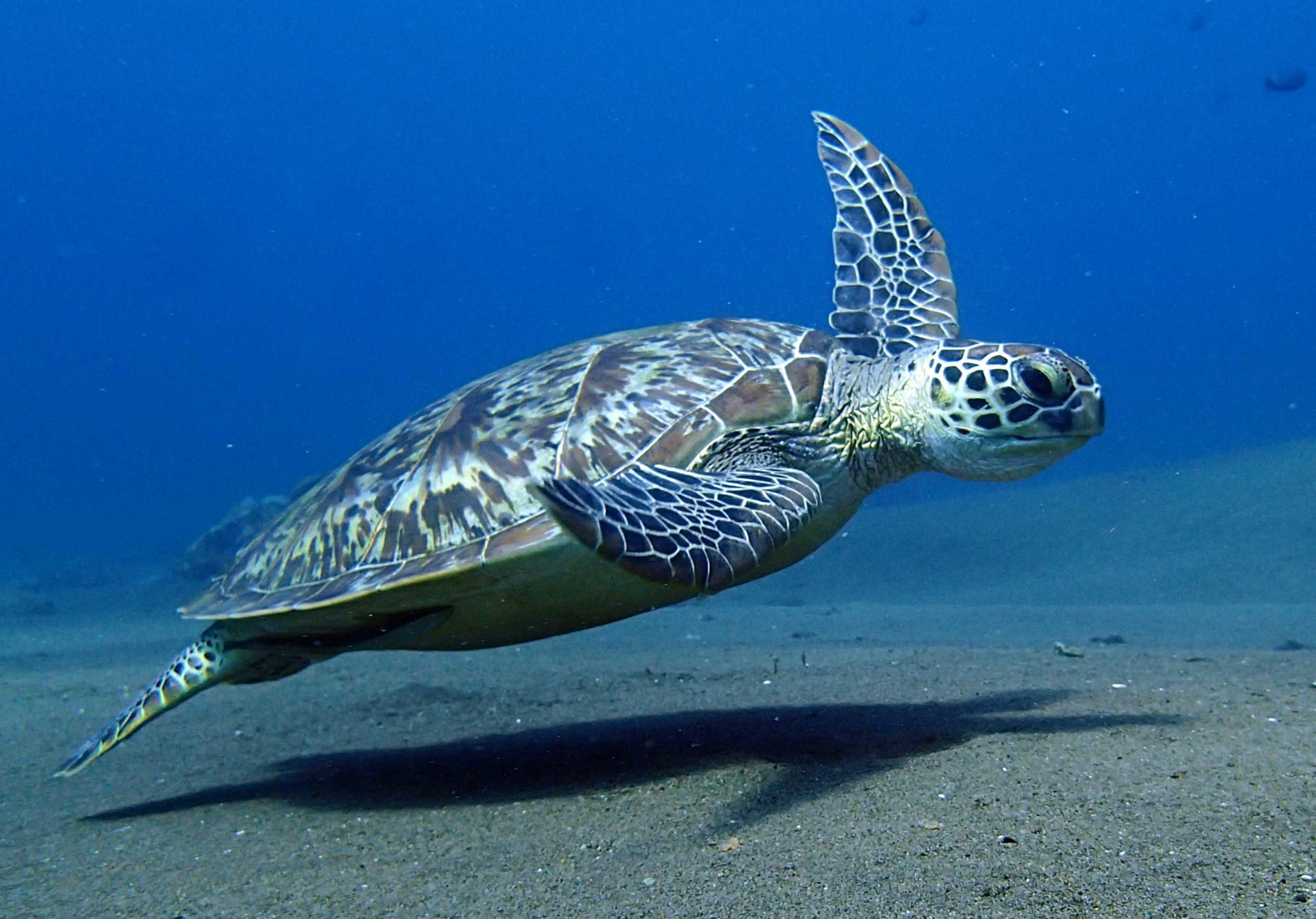 Diving Dauin Dumaguete