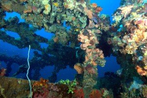 Inside the wreck in Coron